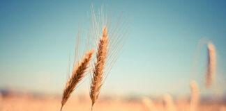 Co ma znaczenie przy wybieraniu preparatów rolniczych