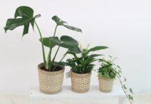W sypialni warto mieć dużo roślin